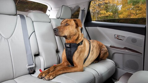 ht kurgo dog harness seatbelt thg 120921 wblog N.J. May Become First State to Require Seat Belts for Pets