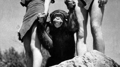 ap cheetah chimp tarzan dm 111228 wblog Cheetah the Chimp of Tarzan Fame Dies at Age 80