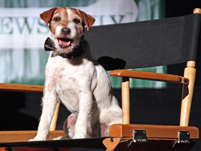 gty uggie dog nt 120206 main Take a Bow Wow: Canine Star Retires