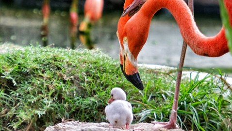 ht baby flamingo kb 130530 wblog Name That Baby Flamingo at Miamis Jungle Island