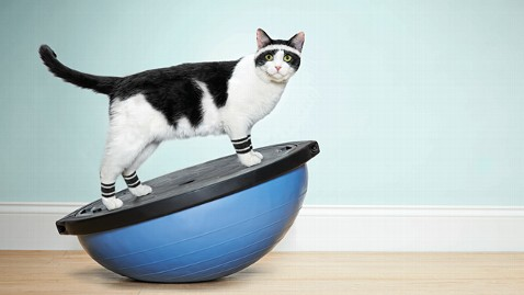 ht cat workout ll 130429 wblog Ad Agency Creates Aerobic Workout Video For Cats