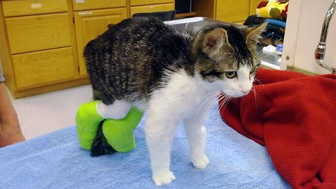 ht corky the cat2 jp 120420 wblog Kitten Gets New Legs and Lease on Life