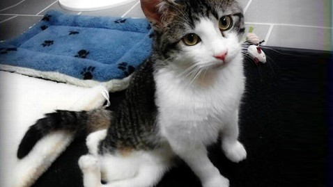 ht corky the cat jp 120420 wblog Kitten Gets New Legs and Lease on Life