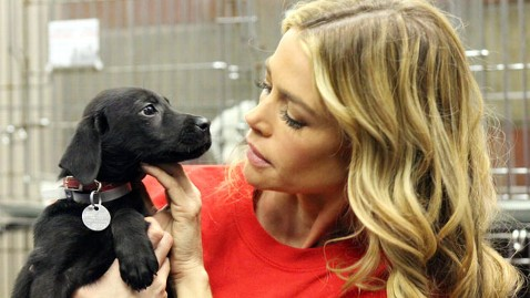 ht denise puppy kb 121113 wblog Denise Richards Adopts Dog in Support of Superstorm Sandy Relief Efforts