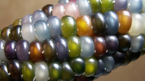 ht glass gem corn kernels seeds trust ll 120516 wblog New Rainbow Colored Glass Gem Corn