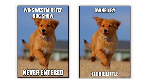 ht ridiculously photogenic dog nt 120413 wblog Ridiculously Photogenic Puppy Latest Meme