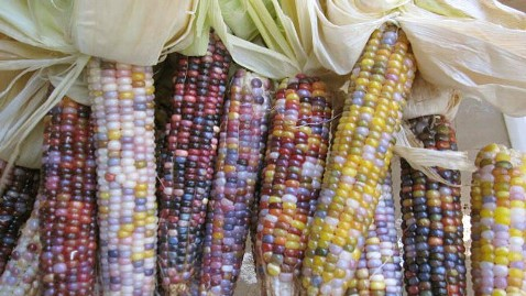 ht seeds trust glass gem corn ll 120515 wblog New Rainbow Colored Glass Gem Corn