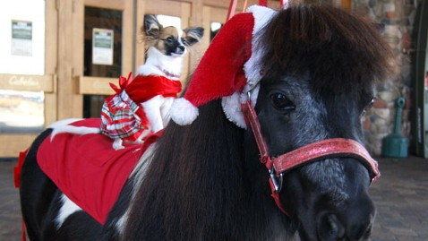 ht tinker and tula nt 121206 wblog Tinker the Salvation Army Mini Horse Brings in Big Bucks