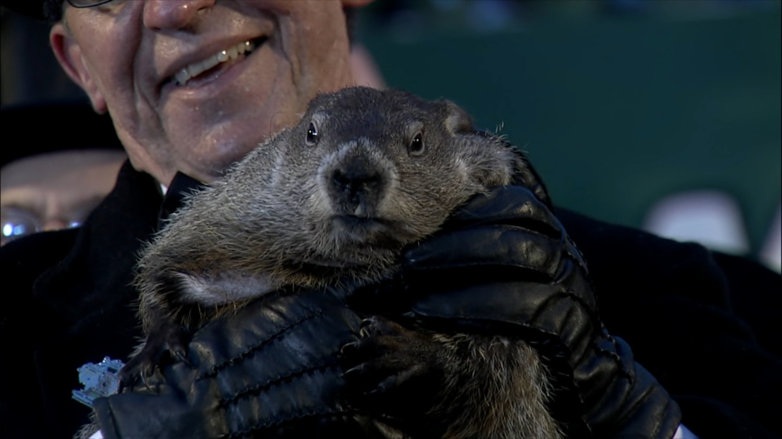 Uncategorized Groundhog Day Videos groundhog day video punxsutawney phil saw his shadow foretelling six more weeks of winter