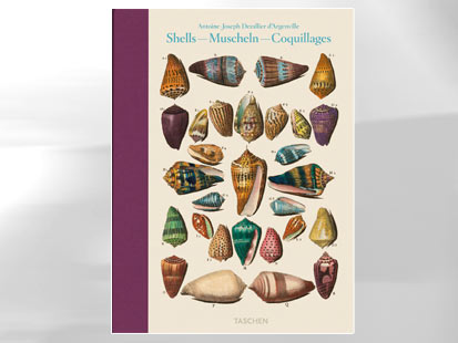 Shells, Muscheln, Coquillages