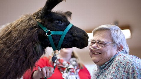 5 wblog Llamas Kiss Patients Blues Away