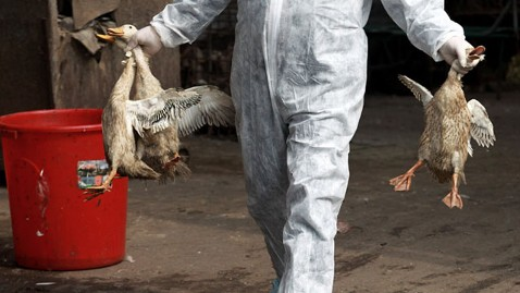 gty bird flu nt 130408 wblog H7N9 Bird Flu Update: 21 Infected, 6 Dead