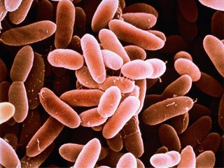 Listeria Photos and Images - ABC News