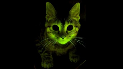 ht glowing cat jrs 110912 wblog Glow in Dark Cats to Help Fight AIDS