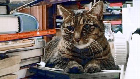 ht penny library cat ll 130329 wblog After Uproar, Man Drops Bid to Evict Library Cat
