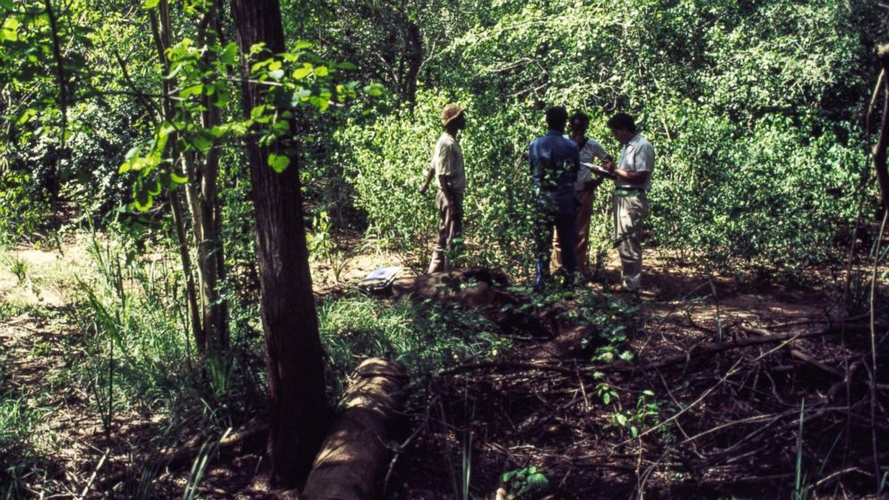 Resource Management and Research employees work on the land survey in a forest clearing.