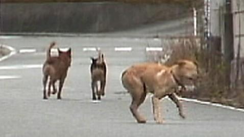 abc fukushima dogs dm 120203 wblog Fukushima Pets Running Out of Time