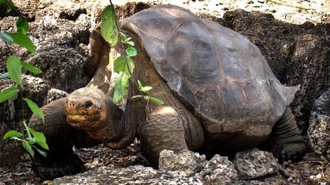 ap galapagos lonely george dm 120625 wblog Giant Galapagos Tortoise Lonesome George Dies
