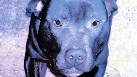 ap lennox dog jp 120712 wblog Dog Deemed Dangerous, Killed In Northern Ireland For Being Bulldog