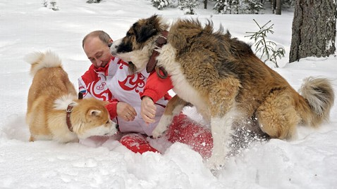 ap vladimir putin dogs 2 ll 130411 wblog Vladimir Putin, Puppies Frolic in Snow