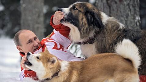 ap vladimir putin dogs ll 130411 wblog Vladimir Putin, Puppies Frolic in Snow