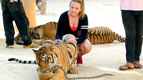 epa thailand tiger temple dm 120426 wblog Thailands Tiger Temple Draws Tourists
