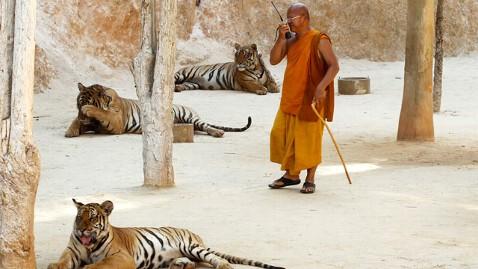 epa tiger temple 3 dm 120426 wblog Thailands Tiger Temple Draws Tourists
