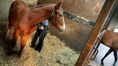 gty cloned horses dm 120712 wblog Cloned Horses Allowed in Olympics