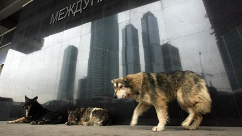 gty moscow stray dogs nt 130125 wblog Dog Hunters Plan Big Cull of Moscow Strays