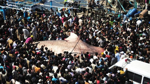 gty whale shark pakistan 2 wy 120207 wblog Giant Whale Shark Reeled In By Pakistani Fisherman