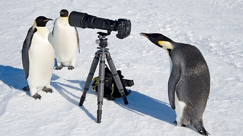 ht emperor penguins camera 1 ll 121018 wblog World News Instant Index: Michael Phelps: Fittest Man of All Time