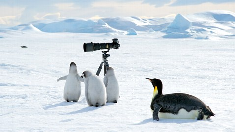 ht emperor penguins camera 2 ll 121018 wblog World News Instant Index: Michael Phelps: Fittest Man of All Time