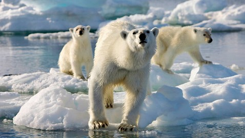 ht frozen planet polar bears ll 111212 wblog Polar Bear Video Lands BBC in Hot Water