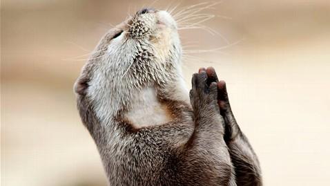 zm praying otter jp 120217 wblog Praying Otter Seeks Help from Higher Power