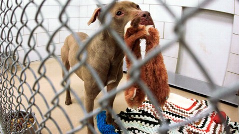 ap prada pitt bull dm 120417 wblog Prada the Pit Bull Spared From Death Row