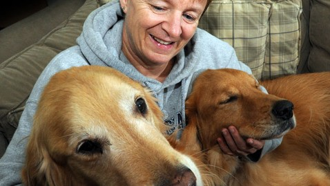 cct penny blackwell golden retrievers lpl 121011 wblog Massachusetts Dogs Lost for Two Weeks Reunited With Owner