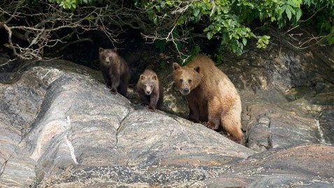 gty bear family ll 120725 wblog Mother Bear and Cubs Ransack Family Home in Bearsville, N.Y.