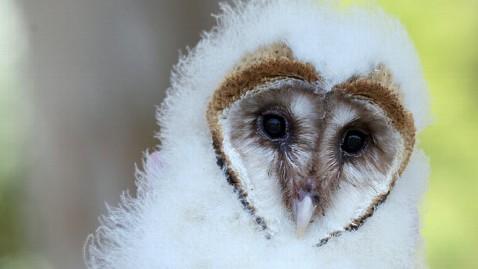 ht baby owl jef 120117 wblog Web Owls Draw Online Eyes