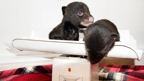 ht bear cubs dm 130302 wblog Man Discovers Bear Cubs on the Side of the Road