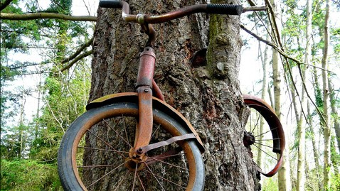 ht bike tree tk 130102 wblog Bicycle Swallowed by Tree in Washington State