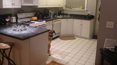 ht craigslist dog photobomb ll 130325 wblog Craigslist Ad Enhanced by Photobombing Dog