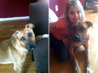PHOTO: Buster the dog went missing after Hurricane Sandy hit his owner's Belle Harbor, N.Y., neighborhood. His owner, Christine O'Donovan, found him just hours before he was scheduled to be ...