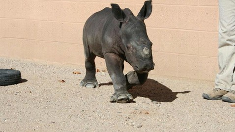 ht facebook abq biopark baby rhino jt 121117 wblog Fed Exed Baby White Rhino Joins Albuquerques BioPark Zoo