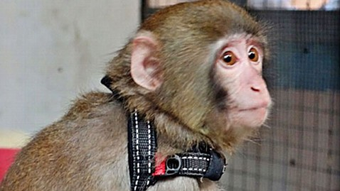 ht ikea monkey home nt 121211 wblog Photos: 7 of the Biggest Celebrity Pets Around