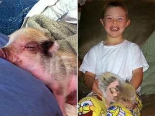 PHOTO: Twinkie the Juliana pig is a therapy pet for Kason Ray, a Florida boy with Down's syndrome, but local officials say its ordinances prohibit the pet, which is considered livestock.