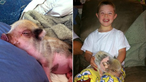 ht kas twinkie nt 121119 wblog Pet Pig May Get Exemption From Coral Springs, Fla.