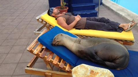 ht panchita sea lion ll 120330 wblog Sea Lion Recovers at Poolside Next to Former Real World Star