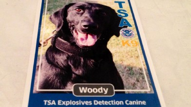 Meet Woody, the Bomb Sniffing Dog