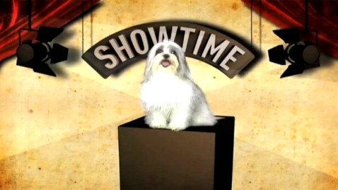 abc ron paul dog ad wy 111205 wblog Ron Paul Compares His Rivals to Shih Tzus
