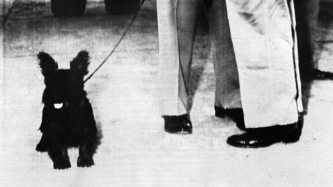 ap dog telek kb 121128 wblog Dogs: The Furry, Faithful Secret Weapons of WWII